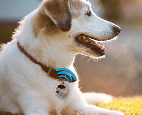 ردیابی حیوانات خانگی